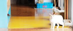 大宮白百合幼稚園 猫の写真